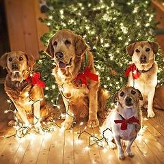Интересная и правдивая характеристика года Собаки