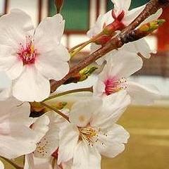 100 японских пословиц и поговорок