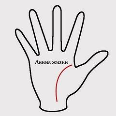 Линия жизни на руке — способ предсказания значимых событий и важная составляющая личности