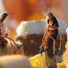 Приснились тараканы — что означает появление этих насекомых в сновидении